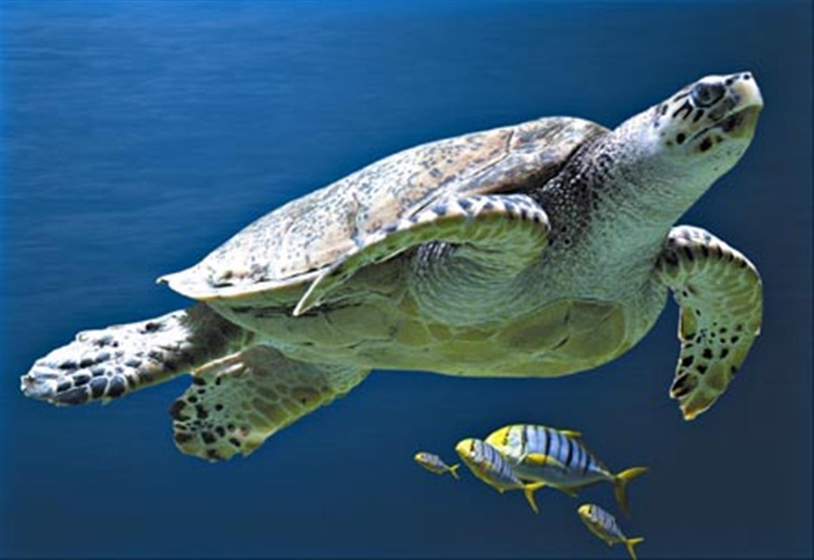 Aquarium la rochelle tourisme charente maritime for Camping pres de la rochelle avec piscine